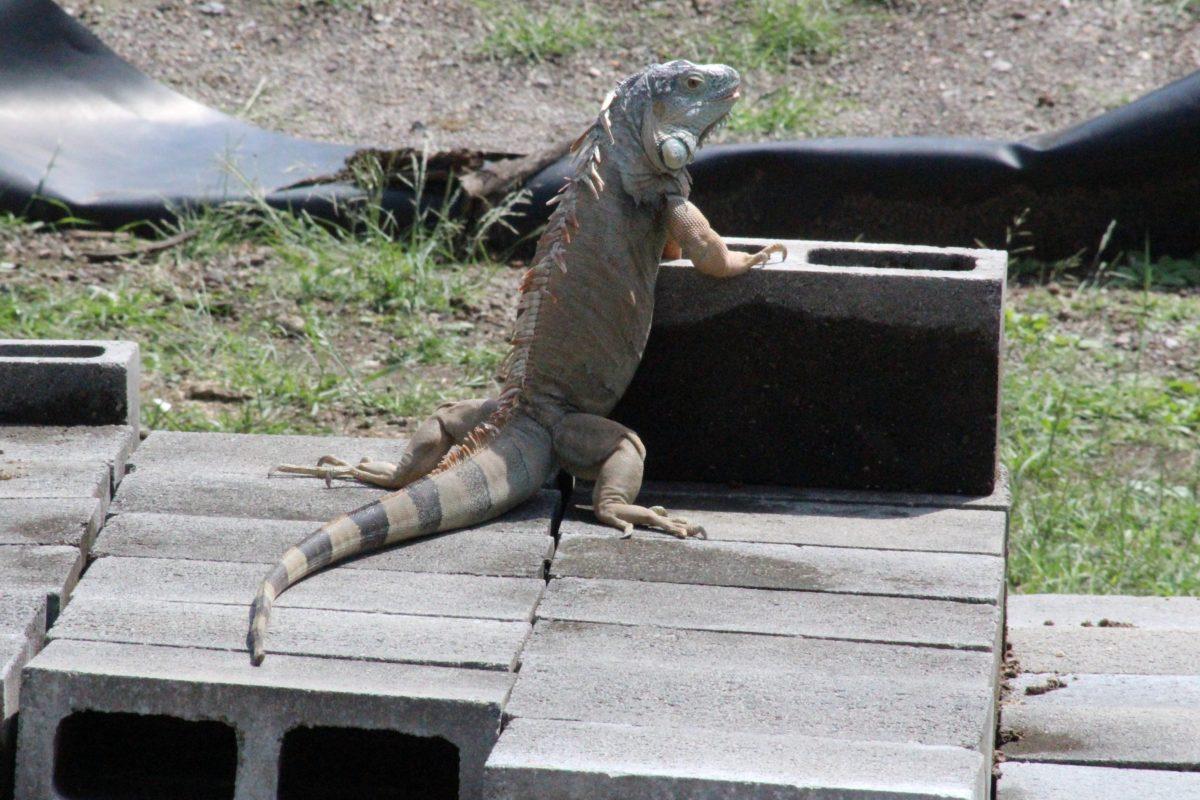 Educación ambiental y conservación de especies, una propuesta de SDS en Morelos