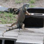 educación ambiental y conservación de las especies