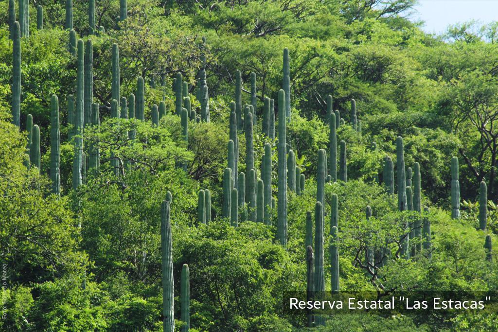 Áreas Naturales Protegidas, que no sabías que existen en Morelos
